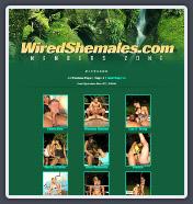 WiredShemales, FerroCash, FerroNetwork